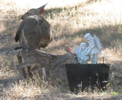 Deer at Faery Fountain
