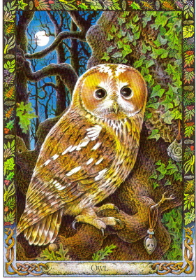 Owl-The Druid Animal Oracle