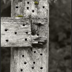 fence with nail holes